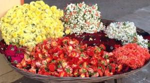 flowersindia